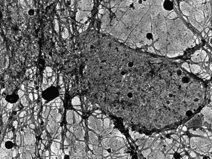 Cell Communication Network - Kristina Jahn, University of Sydney